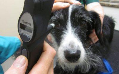 Senior Pet Clinic